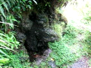 The first big steam cave (Pahoa)